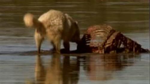 Yellowstone: Battle For Life (Autumn Clip 4)