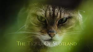 Where to stream The Tigers of Scotland