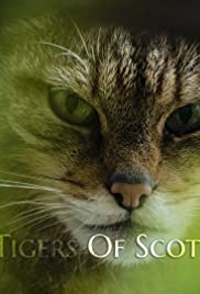 The Tigers of Scotland Poster