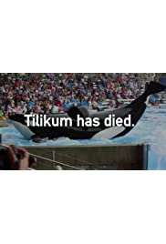 Tilikum Has Died