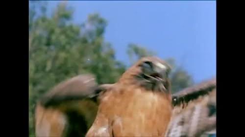 Manimal: Owl In The Park