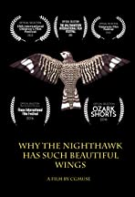 Why the Nighthawk Has Such Beautiful Wings