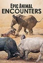 Epic Animal Encounters