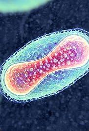 Image result for smallpox amazon