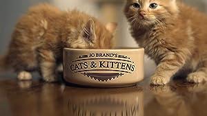Where to stream Jo Brand's Cats & Kittens