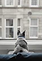 Pawsea (or: The Melancholy Ruminations of a Solitary French Bulldog)