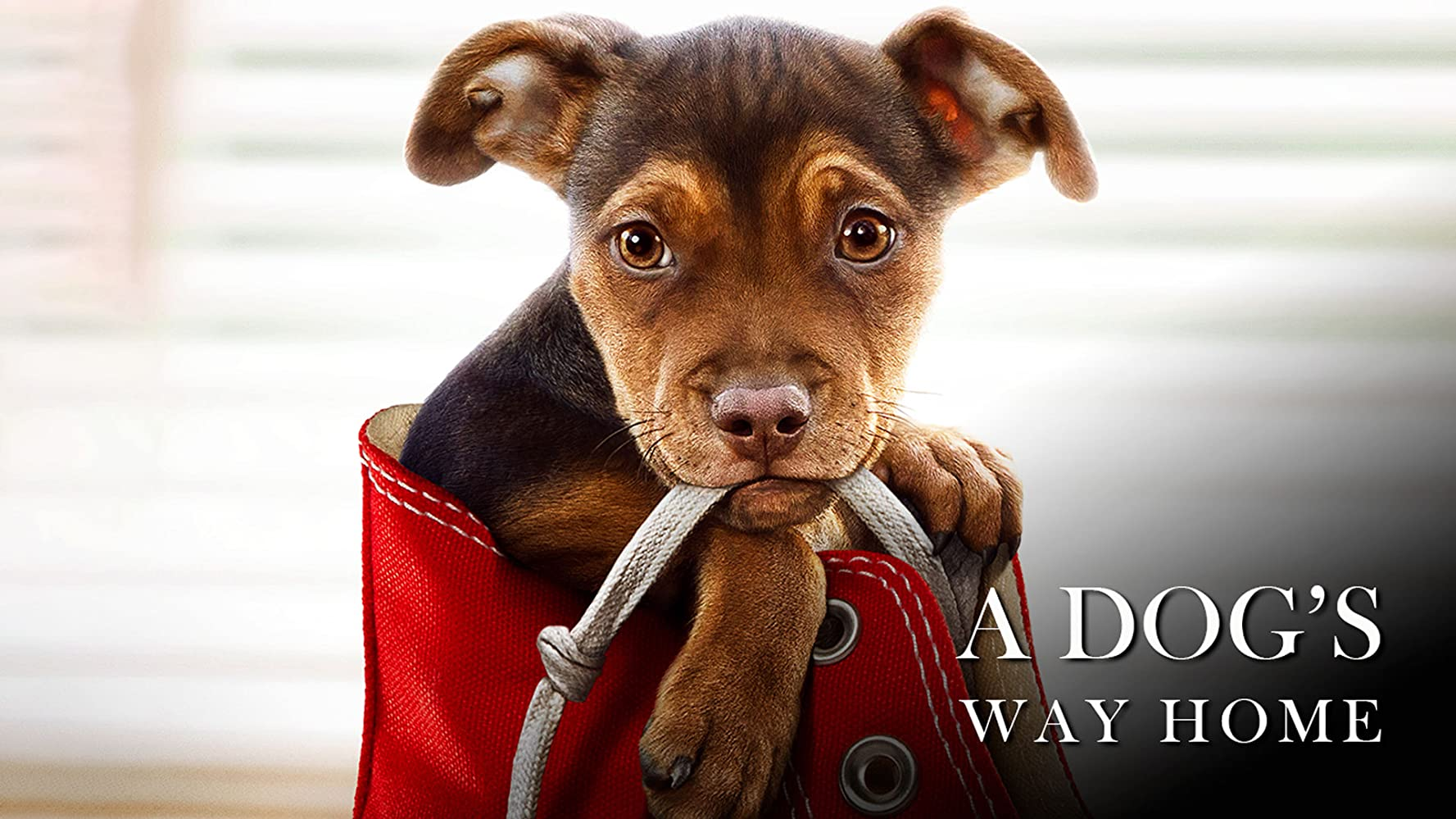 A Dog's Way Home – Hindi Dubbed