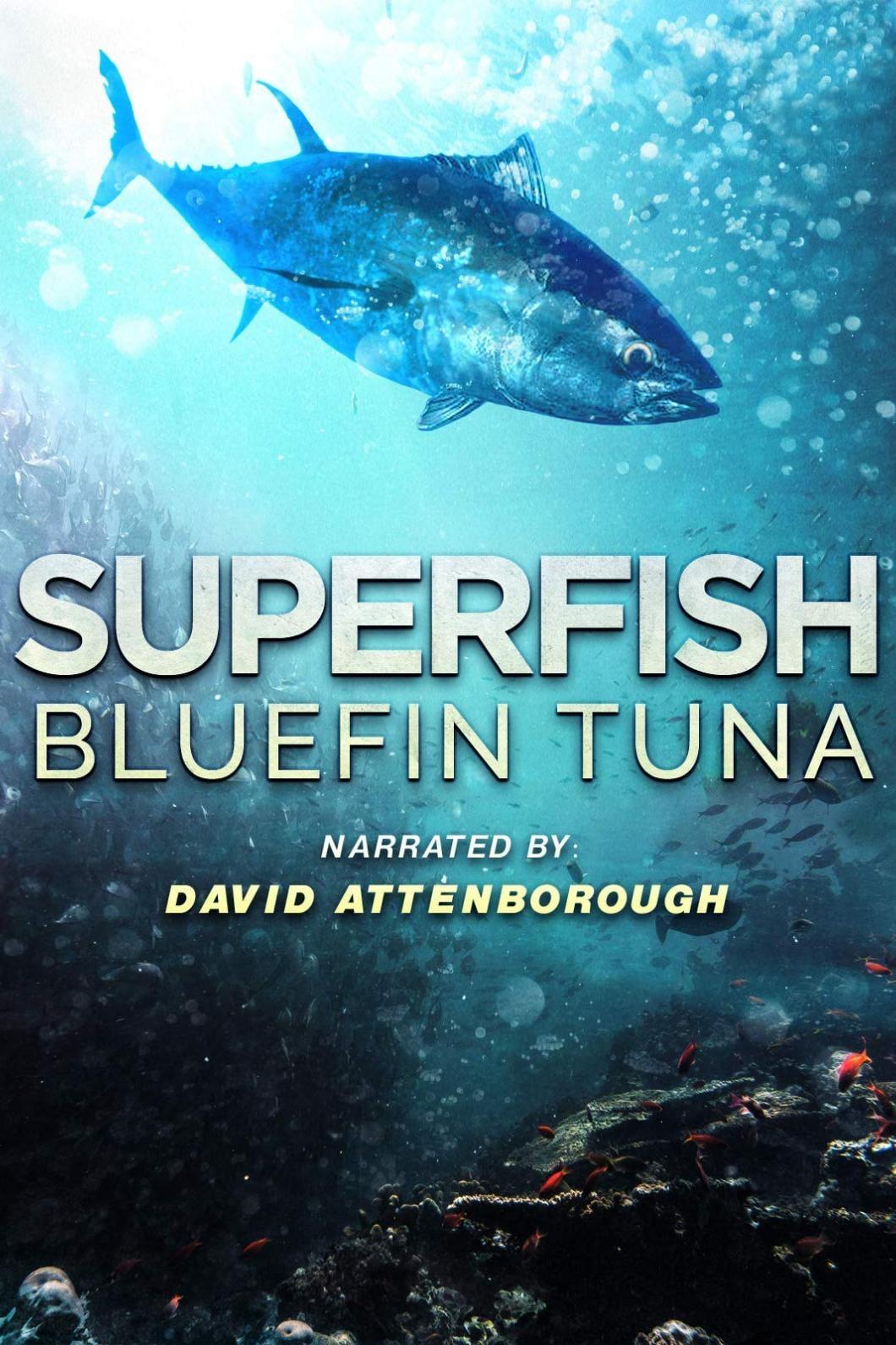 Superfish Bluefin Tuna (2012)