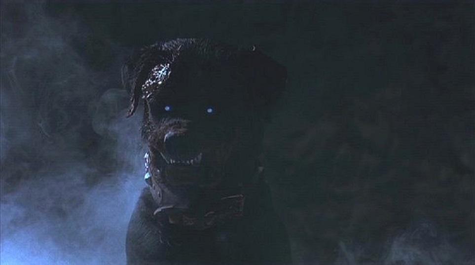 Kết quả hình ảnh cho Rottweiler at night