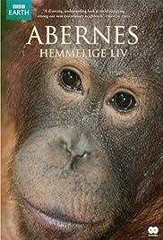 The Secret Life of Primates Poster