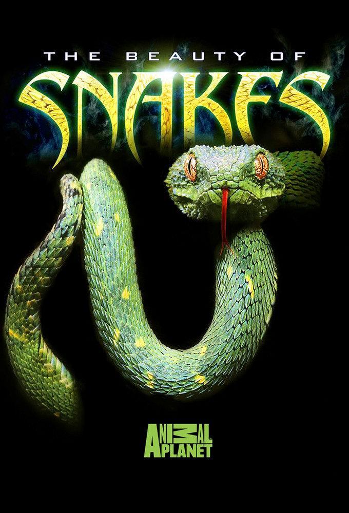 دانلود زیرنویس فارسی فیلم The Beauty of Snakes