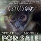 Spider Monkey for Sale (2020)