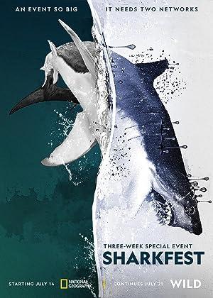 Man vs. Shark