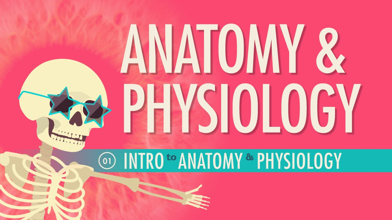 Crash Course: Anatomy & Physiology (2015-)