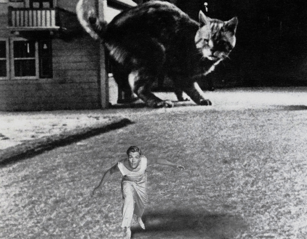 Grant Williams and Orangey in The Incredible Shrinking Man (1957)