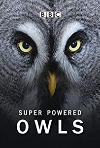 Movie trailer downloads free Super-Powered Owls by none [1280p]