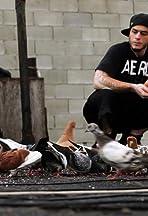 Pigeon Kings of Brooklyn