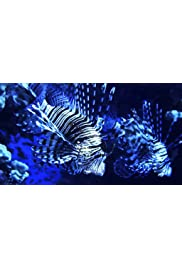 Lionfish: New Pirates of the Caribbean