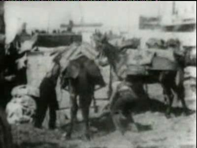 Good english movie to watch Packing Ammunition on Mules, Cuba USA [720p]