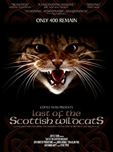 Movie downloads ipad Last of the Scottish Wildcats UK [mp4]