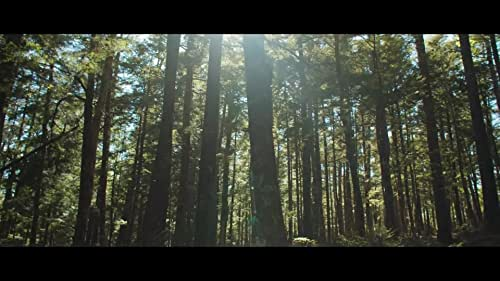 Jamie works operating a wood processor, clear-cutting for pulp. At the end of each shift, he walks through the destruction he has created looking for injured animals, and rescues those he can. Jamie's desire to break free from this world is thwarted by the very environment and circumstance he's trying to escape.