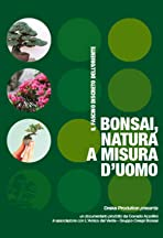 Bonsai, natura a misura d'uomo