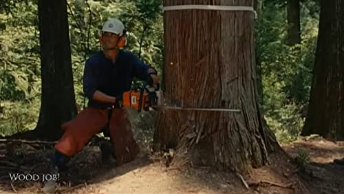 Wood Job!  digest