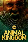 Primary image for Animal Kingdom