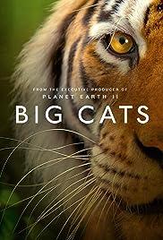 Big Cats Poster