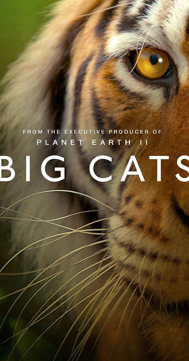 [2018][欧美][纪录片][大-猫 Big Cats 2018 S01-E1-E3][1080P-MP4-3 4G][国语版]