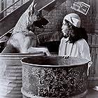 Madeline Kahn and Augustus von Schumacher in Won Ton Ton: The Dog Who Saved Hollywood (1976)