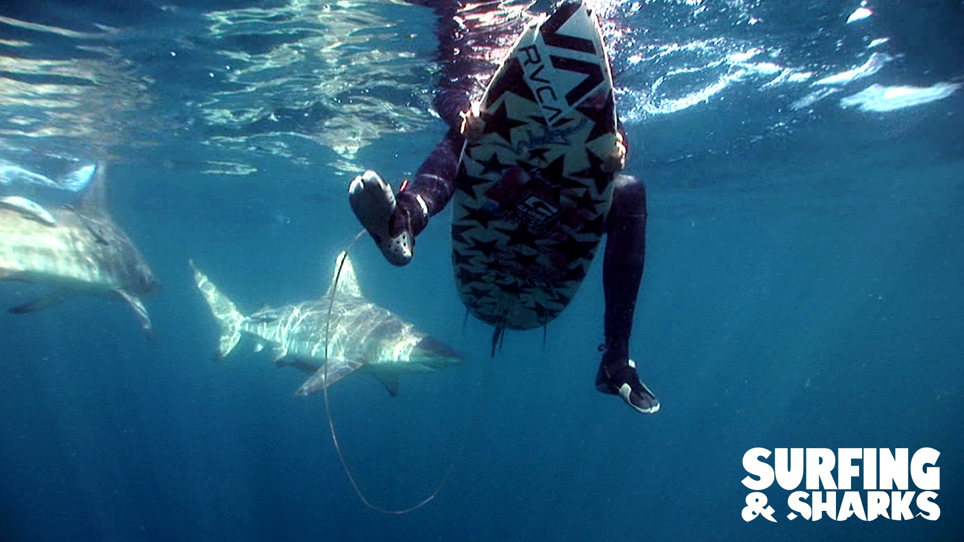 Surfing And Sharks 2011 Photo Gallery Imdb