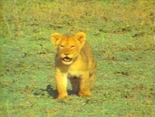 National Geographic's Really Wild Animals: 6 Home Video Set