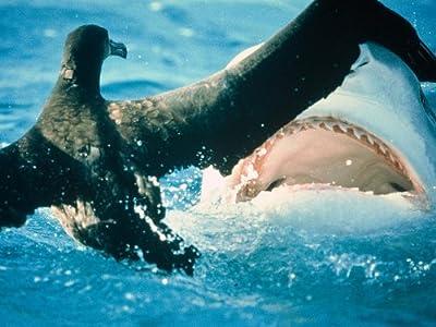 english movie shark