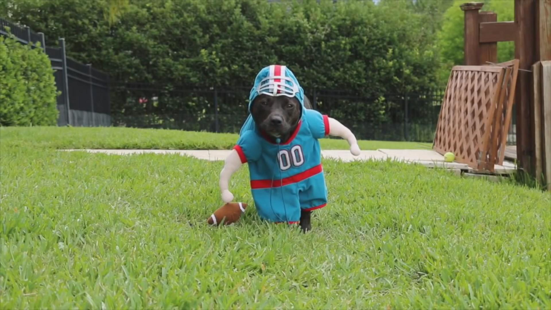 Смешные костюмы для собак гифки