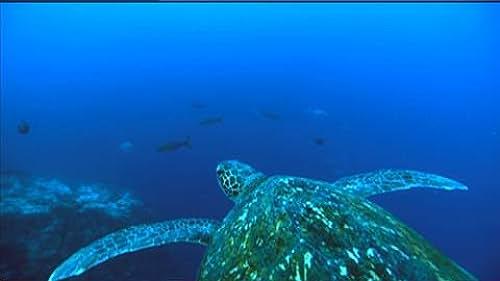 Trailer for Planet Ocean