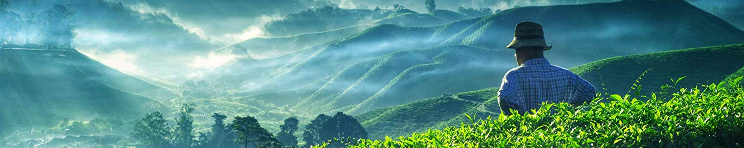 Valley of Tea image