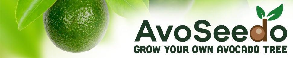 AvoSeedo header