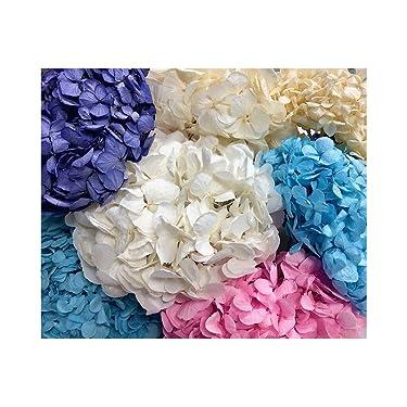Flores Preservadas Artipistilos/® Flor Preservada Para Decoracion De Tocados Y Coronitas