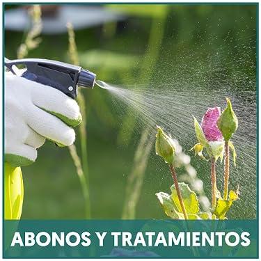 Amazon.es: verdecora