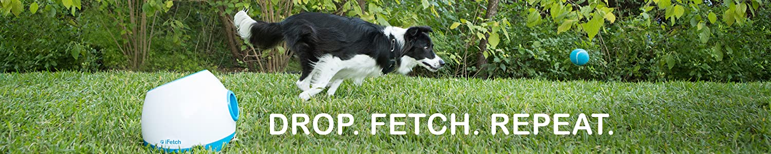 iFetch header
