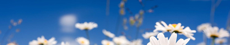 Whiff Botanicals image