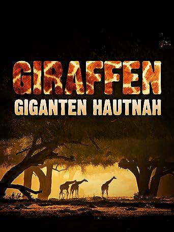 Giraffen - Giganten hautnah