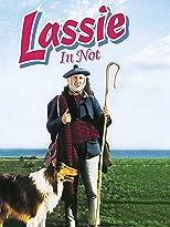 Lassie in Not