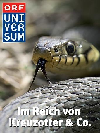 Universum: Im Reich von Kreuzotter & Co.