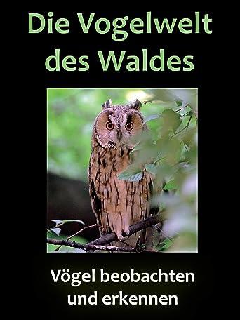 Die Vogelwelt des Waldes