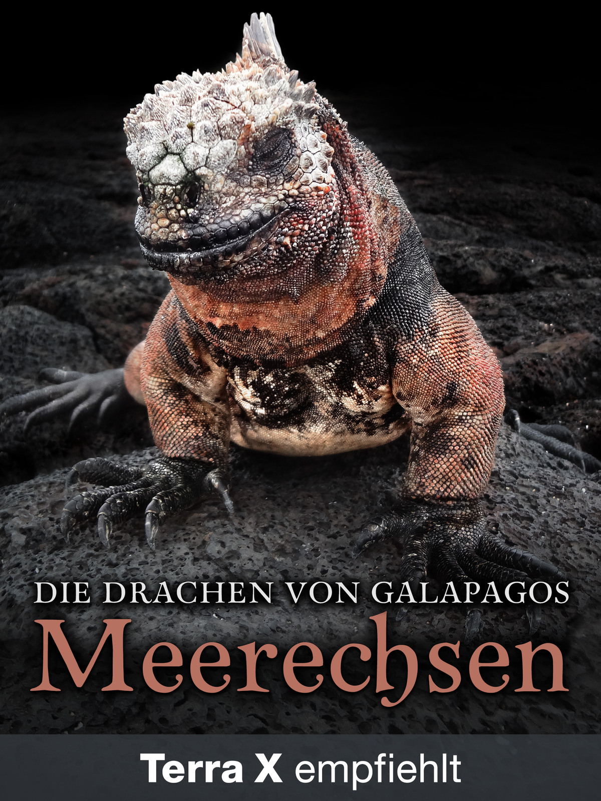 Die Drachen von Galapagos: Meerechsen