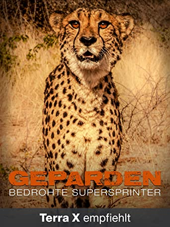 Geparden - Bedrohte Supersprinter