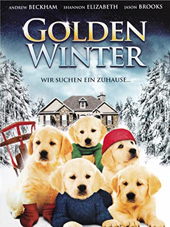 Golden Winter - Wir suchen ein Zuhause