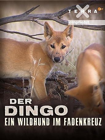 Der Dingo - Ein Wildhund im Fadenkreuz